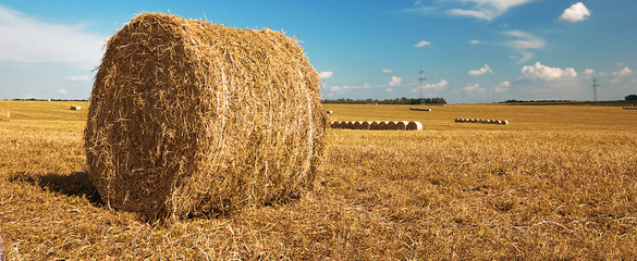 Fototapete - Harvested grain field and straw bales. Rural landscape.
