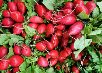 Wall Mural - close up on bunches of fresh radish with green leaves