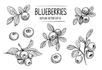 Sketch of blueberry. Hand drawn outline converted to vector