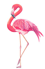 Watercolor exotic flamingo isolated on white background