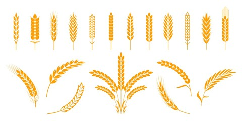 Fototapeta Wheat and rye ears. Barley rice grains and elements for beer logo or organic agricultural food. Vector illustration isolated heraldic shapes golden patterns rice and barley