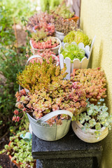 Variation of flower pots with succulents