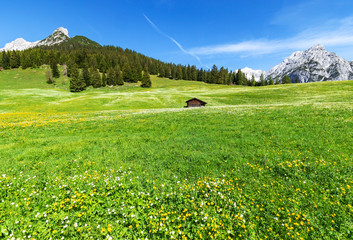 Wall Mural - Scenic view with blossoming meadow near Walderalm, Austria, Gnadenwald, Tyrol Region