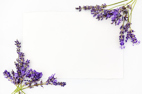 Flowers composition. Frame made of fresh lavender flowers on white background. Flat lay, top view, copy space, square