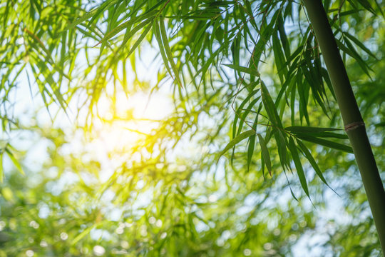 bamboo tree park outdoor nature