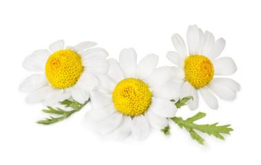 Photo sur Plexiglas Marguerites Beautiful chamomile flowers on white background