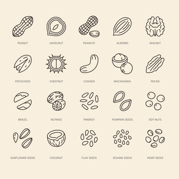 Nuts flat line icons set. Peanut, almond, chestnut, macadamia, cashew, pistachio, pine seeds vector illustrations. Outline signs for healthy food store