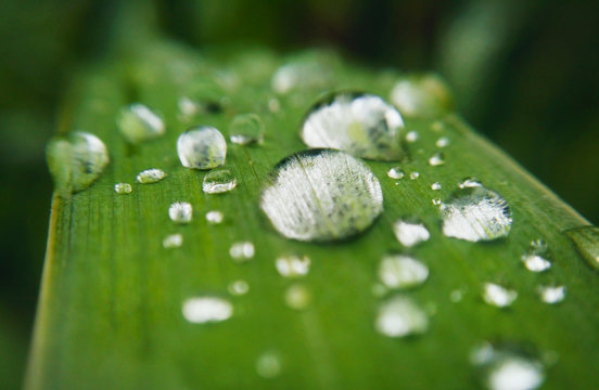 water droplets on the leaf of the plant. very shallow depth of field.