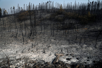 Trees are seen after a forest fire near the village of Cardigos
