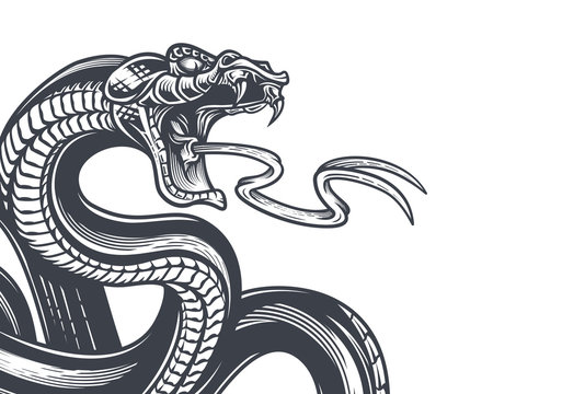 Snake background. Hand drawn vector illustration in engraving technique isolated on white.
