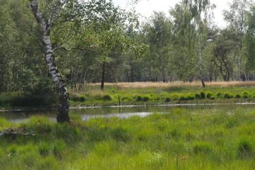 Moorlandschaft bei Gronau Venn