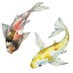 Aquatic underwater colorful tropical fish set. Watercolor background set. Isolated goldfish illustration element.