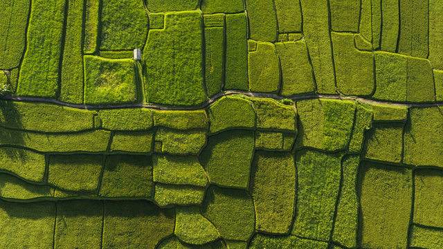 Abstract geometric shapes of agricultural parcels in green color..Bali rice fields. Aerial view shoot from drone directly above field.