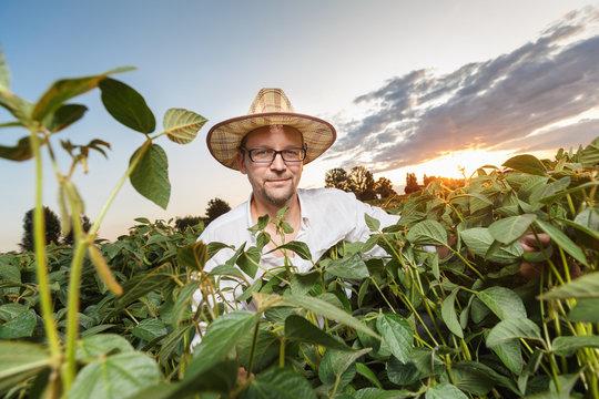 Farmer inspecting soybean field before sunset