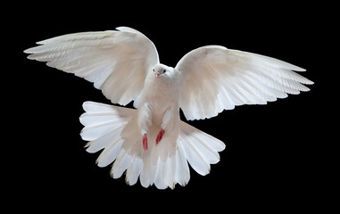 Flying white doves on a black background Wall mural