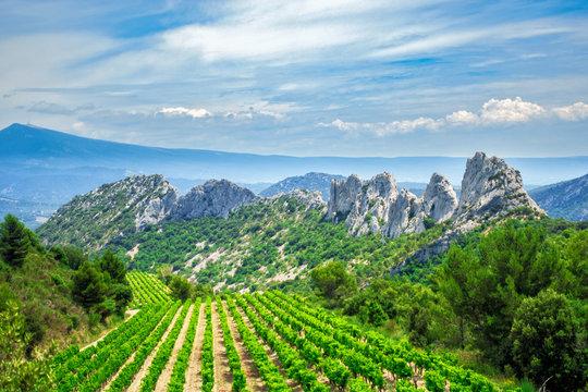 Weinbau im Angesicht des Mont Ventoux in den dentelles de montmirail in der Provence