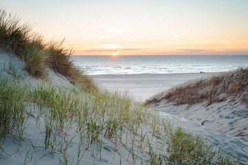 Canvas Prints North Sea Dunes at sunset on bright blue days at the beach. Dune grass blowing in the summer breeze