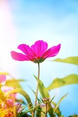 Fototapete - Blumenwiese - Hintergrund Blumen Wiese Wildblumen