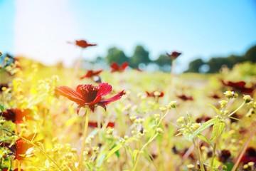 Wall Mural - Blumen Wiese mit Insekten - Sommer Hintergrund Blumenwiese