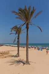 Guardamar del Segura Costa Blanca Spain palm trees on the beautiful sandy beach