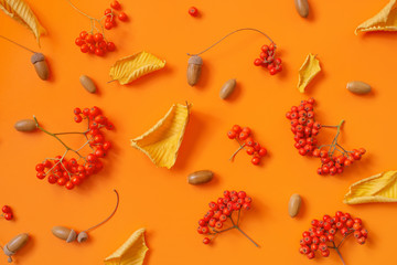 Wall Mural - Autumn pattern with bright ripe rowen