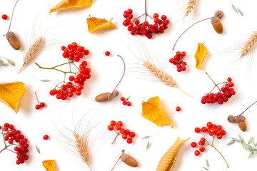 Autumn pattern with with bright ripe rowen
