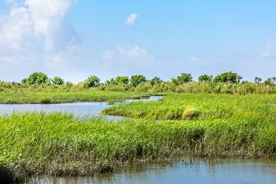 Classic bayou swamp scene of the American South in Texas