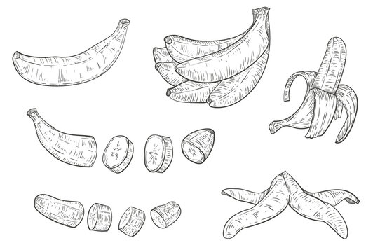 Set of hand drawn sketch banana isolated on white background. Vector vintage retro illustration.