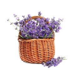 Fresh lavender flowers in basket on white background
