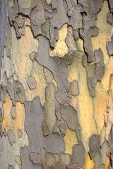 Die Rinde oder Borke der verschiedensten Bäume