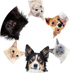 Collage of domestic animals in circle with copy space.