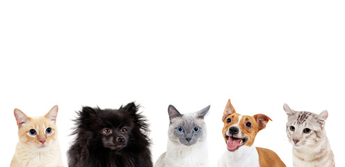 Collage of domestic animals with copy space over heads.