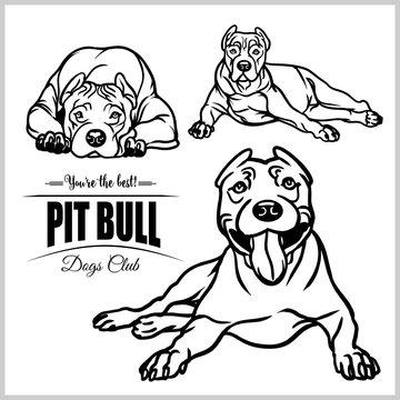 Pit Bull - vector set isolated illustration on white background