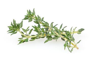 Fototapeta Fresh thyme isolated on white background obraz