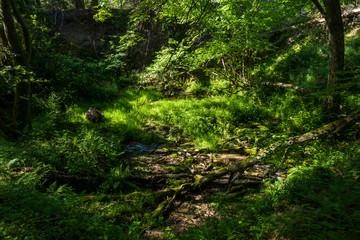 Strumyk strumień źródło wody rezerwat rzeki stążki las lato