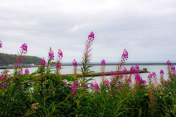 Tuinposter Feeën en elfen coast wild flowers in purple and pink