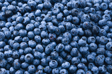 Fresh blueberry background. Texture blueberry berries close up. Wall mural
