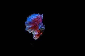 Keuken foto achterwand Grafische Prints Beautiful fish in Thailand