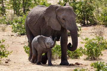 Elephant and baby elephant at Etosha National Park, Namibia, Africa