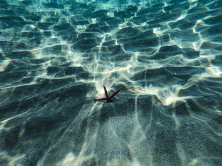 Underwater view of a red starfish at the sandy and rocky bottom of the sea.