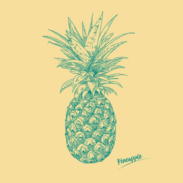 Hand drawn vector illustration pineapple by retro  and vintage ink flat style, engraved simple doodle sketches.