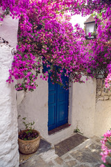 blue door on white narrow wall on street with pink flowers in old town