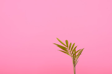 sprout in a pot on pink background