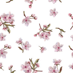 Watercolor Hand Painted Sakura Flowers Pattern on White Background