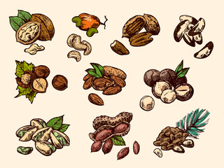 Nuts set sketch style food illustrations. Hand drawn beautiful pictures