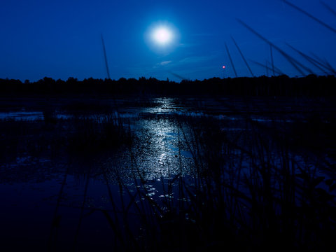 Moon rising over a swamp