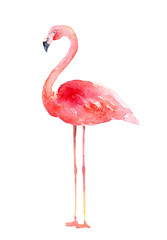 Watercolor pink flamingo on white background