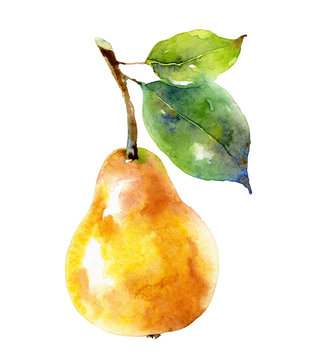 Watercolor yellow pear isolated on white background