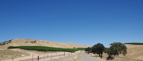A rural road through the central California wine country with a wine field on the left and oak trees on the right and golden hills in front under an intense blue summer sky