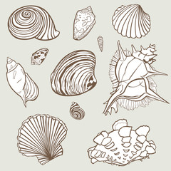 Vector hand drawn elements from seashell paradise collection. Element design for invitations, greeting cards, posters, prints, banners, flyers etc.